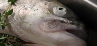 Lachs-Forelle aus dem Ofen auf Zitronen-Fenchel-Gemüse