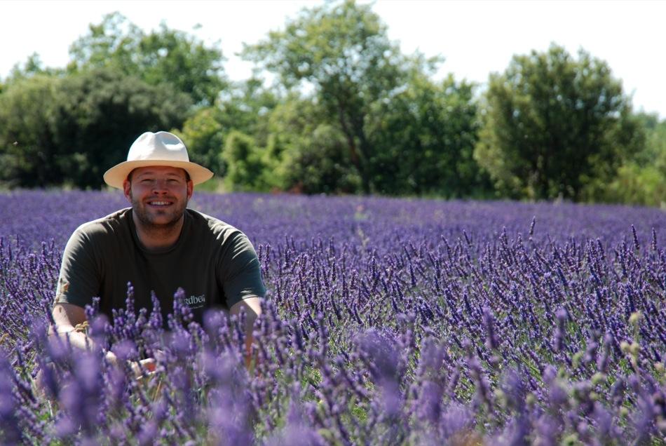 Lavendel bluete 2012 17