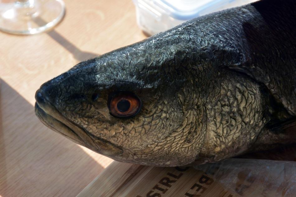 Jochen's Adlerfisch
