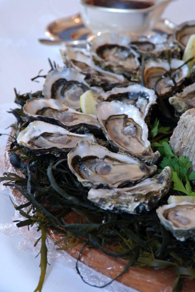 Austern und Sülze